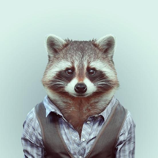 cool raccoon.jpg
