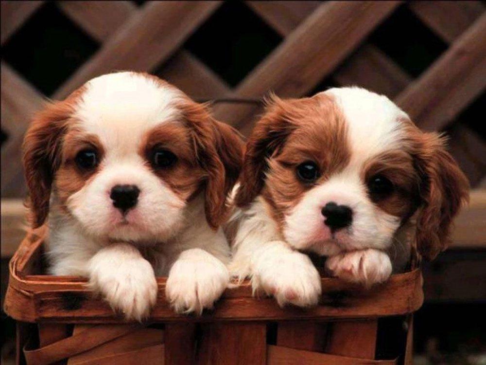 68411742-cute-puppy-wallpapers.jpg