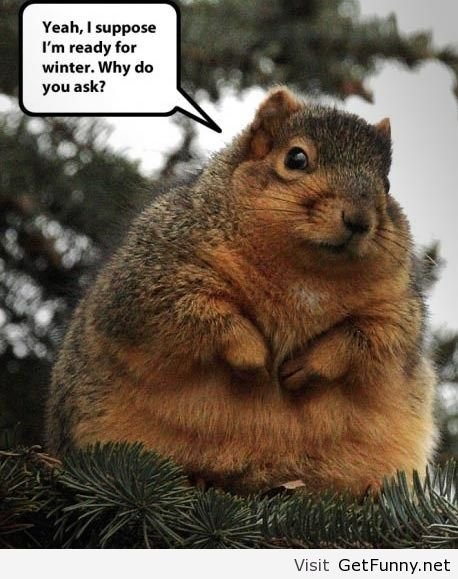chubby squirrel.jpg