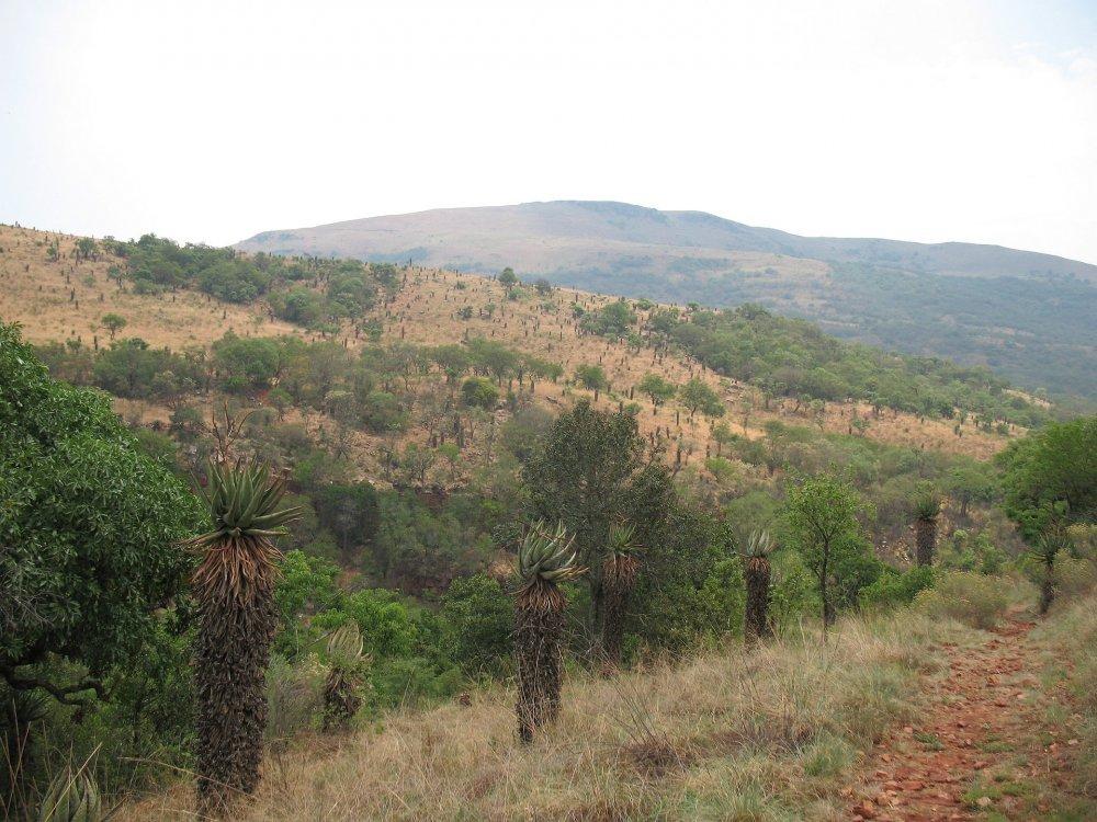 hillpath.thumb.jpg.98160128877a07446a9189969314d8c2.jpg